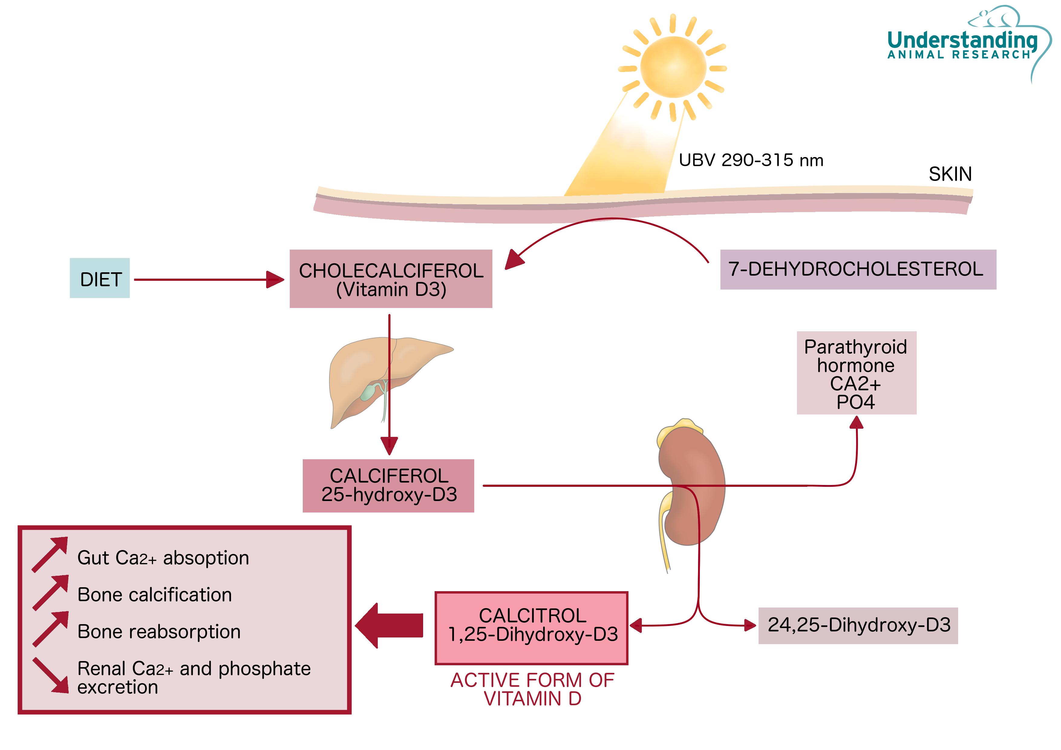 cholecalciferol - vitamin d | ari | ari
