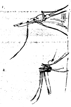 Figure 5. Original sketch made by Sir Ronald Ross showing the position at rest of: (1) The anopheles mosquito which carries malaria, and (2) Culex and aedes mosquitoes which carry filaria and yellow fever.