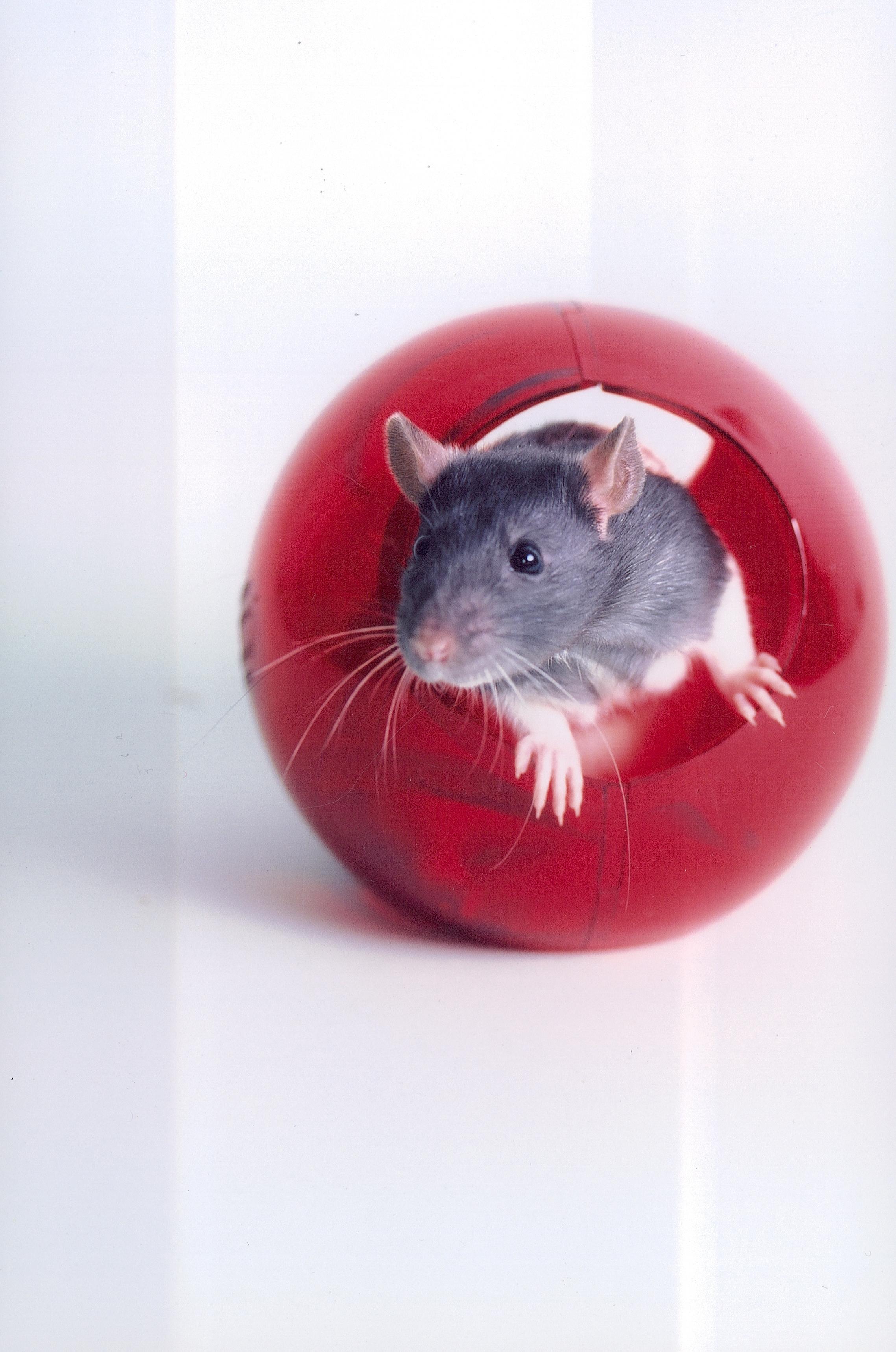 CRISPR gene editing eliminates HIV infection in mice ...