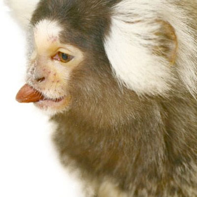 Animal testing on non-human primates